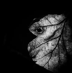 Leaf me alone (MortenTellefsen) Tags: leaf alone bw blackandwhite blackandwhiteonly black caveblack canon 80d blad svarthvitt svart monochrome face nature norwegian artinbw art
