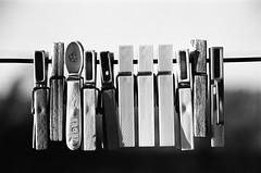 Pegs (Semjaja) Tags: pegs slr blackandwhite blackandwhitephotography bw monochrome nikonf90x 28105mmf3545dafnikkor 28105mm kodak kodaktmax400 tmax tmax400 film filmlives 135 35mm 35mmfilm 35mmcamera classiccamera ishootfilm ilovefilm