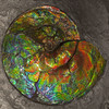 Ammonite Nacre Squared (cobalt123) Tags: ammolite 2footdiameter 2018 canadafossils february3 johnissa tucsoncitycenter tucsongemandmineralshow ammonite crystal crystalform fossil iridescent mineral nacre outdoors rock shale specimen