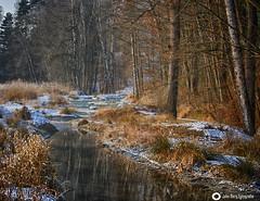 Winter (john_berg5) Tags: winter forest wald snow schnee bach bayern bavaria
