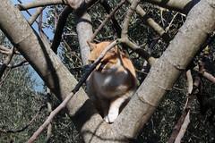 IMG_2247 (19ouch83) Tags: lago lake trasimeno passignano umbria cat gatto