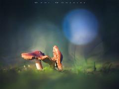 Juntas hasta la muerte (www.studio360fotografia.es) Tags: setas zeissikontalon valdeinfierno 85mm 28 proyector projector olympus omd em10 mushroom fungi bokeh desenfoque color colors nature naturaleza fantasia fantasy