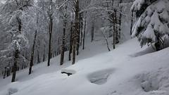 11022018-IMG_1632 (Steffan Photos) Tags: la bresse wildenstein haut rhin alsace vosges randonnée raquettes grandest france fr