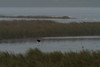 Dixon_JB_486_4000 (Joanne Bouknight) Tags: dixonwaterfowlrefuge illinois mist morning observationtower rain storm thewetlandsinstitute
