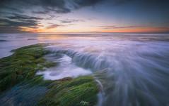 L-064-Seaweed Harmony (arq.alextoro) Tags: algas atardeceres lajollacove landscape landscapes largaexposicion longexposure olas paisaje paisajes sandiego sea sunset texturas twilight seascape seaweed waves