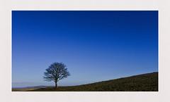 Blue Sky Thinking.... (hall1705) Tags: blueskythinking tree cissbury ring hill lonetree blue clearskies landacape nikon1j5