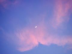 P2201107 (Paul Henegan) Tags: moon bluehour clouds crepuscule dusk pink sky waxingcrescent