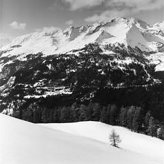 Mountain study 8 (AEmets) Tags: 80mm argentique film hasselblad mountainstudy ilfordfp4 moyenformat bnw blackandwhite winter
