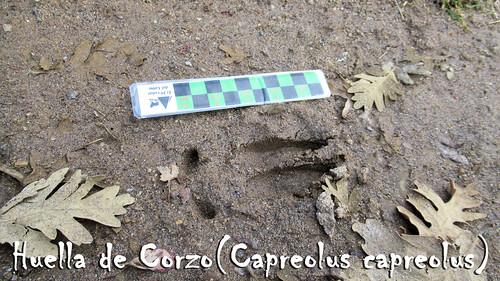 Senderismo por Cascadas Aguas Cemidas Zamora Fotografía David Lazo Alonso (11)