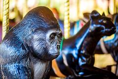 Ride (Thomas Hawk) Tags: america forestpark missouri mo saintlouiszoo stlouis usa unitedstates unitedstatesofamerica carousel gorilla merrygoround monkey zoo fav10
