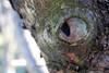 13/365 (Mellow Mandy) Tags: tree bark treebark lichen eye evileye nature 365project project365