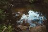Reflejos (~ Reinaba en el ambiente la Locura ~) Tags: canon 6d sigma 2470 leaves summer autumn water mirror sky brasil