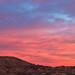 Sunrise Bliss