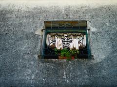 Colonia del Sacramento (II) (ricdovalle) Tags: colonia del sacramento arquitetura architecture janela window flores flowers quadro frame sony alpha a6500 ilce6500 sigma