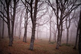 Los árboles prefieren vivir en el bosque