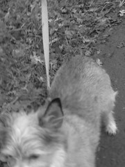 IMG_9059 (earthdog) Tags: 2018 dog pet animal liveanimal needstags needstitle canon canonpowershotsx720hs powershot sx720hs