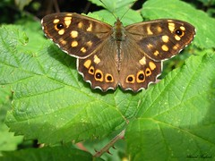 Butterfly 1567 (+1000000 views!) Tags: butterfly borboleta farfalla mariposa papillon schmetterling فراشة