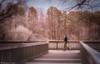 In a foggy day (Marcelo Rodriguez-Puebla) Tags: raleigh nc us usa 2016 ir infrared infrarojo 650nm sone a6000 pond lake lago fog niebla foggy luminar walk people street streetphotography caminando trees arboles
