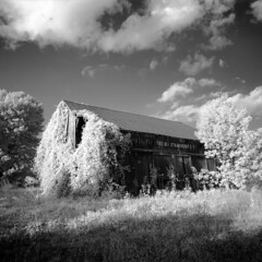The Big Strawberry (S.F. Sorrow) Tags: blackandwhite bw blackwhite monochrome outdoors barn infrared rolleiinfrared400 rodinal clouds