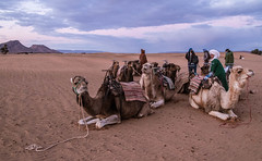 IMG_9513 (Kate Marron) Tags: travel morocco marrakesh backpacking photography africa