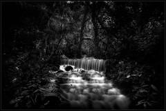 The River... (michel di Méglio) Tags: riviere bw monochrome nd 1000 france nikon 7100 longexposure sigma1020 forest