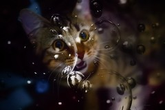 Bubble game ... (Julie Greg) Tags: animal cat canon5dmarkiv bubble game kitten