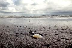 Valva (Wal Wsg) Tags: mar mardeajo valva 7dwf 7dwfmacroorcloseup phwalwsg dia day agua water sea