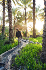 Morning routine (SteTre.) Tags: misfatalabriyyin addakhiliyahgovernorate oman om trees light sunrise sun green