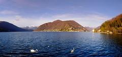️️ Porto Ceresio ️️ #portoceresio #montagne #mountains #lake #lago #water #panorama #love #couple #italy #switzerland #svizzera #lagodilugano #lugano #varese #lombardia #italia #cigni #friday #goodday #winter #cold #swan #lakecity #solo #sky #aninals #nat (ilpiccolofaso) Tags: panorama lugano friday couple varese aninals cigni water lagodilugano nature goodday solo swan svizzera portoceresio italy lakecity sky lake montagne love mountains lago cold lombardia italia switzerland winter