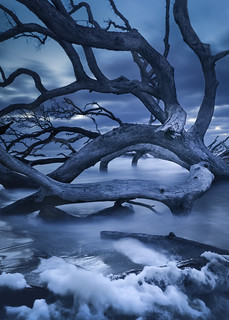 The Boneyard of the Dark Winter