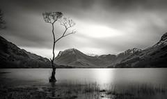 Lone Tree, Buttermere (urfnick) Tags: canon eos 1300d longexposure mono bw blackandwhite cumbria thelakedistrict thelakes england uk sundaylights