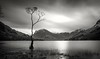 Lone Tree, Buttermere (urfnick) Tags: canon eos 1300d longexposure mono bw blackandwhite cumbria thelakedistrict thelakes england uk sundaylights