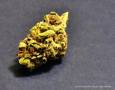 Spring is just around the corner (Standing Hawk) Tags: bud spring kush green jeffersonbeauregardkush