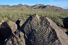 Spiral Petroglyph (NaturalLight) Tags: spiral petroglyph saguaronationalpark saguaro west arizona