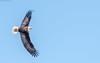 Eagle Shoot - Le Claire, IA - 2018 Feb - bks-2354 (Brian Sprague Photography) Tags: bird cold largebird leclaire mississippiriver transportation water winter eagles baldeagle