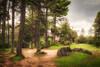 54/2018 (Salva Mira) Tags: ciudadencantada conca cuenca bosc bosque pinar pine boirina boira fog niebla natura nature naturaleza salva salvamira salvadormira