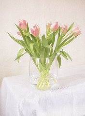 Very Pink (suzanne~) Tags: flower vase tabletop stilllife pink pinktulip tulip indoor texture topazimpression