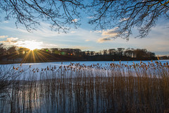 Sunset on a cold, bright Danish winter day (A.Keskin) Tags: winter denmark skanderborg lake sunset sun sky trees forest cold reeds landscape colors branches d750 nikon 24120mm sunlight rays