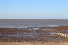 IMG_6912 (cindyincidentally) Tags: whitstable kent kentcoast britishbeach seaside seashore seasidetown