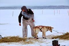 Along the trail - Alaska (JLS Photography - Alaska) Tags: alaska alaskalandscape animal animals dogracing dogmushing dogs dograce dogteam dog man musher landscape jlsphotographyalaska cold snow winter winterlandscape