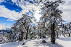 Snow at Troodos (130) (Polis Poliviou) Tags: snow nationalpark troodosmountains cypruscountryside clouds cloudy 2018 countryside freezing cyprus lovenature love naturepictures naturepics forest rural mount mountain mountains pinewood cold frost winter pinetrees pinetree mediterranean forestpark nationalforestpark olympus peak frozen morning environment nature ice snowtrees snowtree sports island cyprustheallyearroundisland cyprusinyourheart yearroundisland zypern republicofcyprus κύπροσ ©polispoliviou2018 polispoliviou polis poliviou πολυσ πολυβιου lovecyprus ski skateboard skiing skiers wood green earth canon