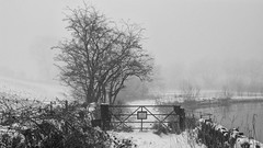 Peace (_J @BRX) Tags: longwood huddersfield kirklees yorkshire england uk march 2018 colnevalley winter nikon d5100 snow blackandwhite bw landscape field fence white mist fog path tree reservoir yorkshirewaterreservoir