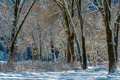yosemite (315) 9350 (captured by bond) Tags: yosemitenationalpark winter winterscape california californialandscape capturedbybond nationalpark naturescenic trees tree seetheworld catchmeoutsidehowboutdat painting wow