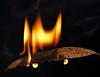 Bushfire (Kevin Rheese) Tags: macromondays flame bushfire leaf hot fire alight eucalypt