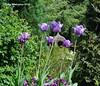 Sutton Park (TonyW1960) Tags: suttonpark suttonontheforest