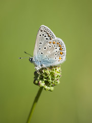 Hôte des prés **--- ° (Titole) Tags: papillon argus butterfly titole nicolefaton shallowdof green unanimouswinner thechallengefactory