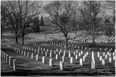 Arlington National Cemetery (mattpacker1978) Tags: arlington national cemetery united states military virginia hallowed ground freedom nations conflicts department defence stars stripes potomac river presidents lay rest peace blackandwhite black nocolour nocolor canon canondigital canon700d canonphotography bnw love cherish never forget everlasting forever respect grass tree park sky war fight fought wars