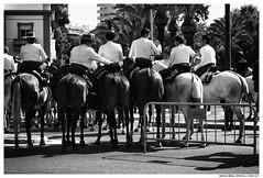 ,,,,,,,,,, (Matías Brëa) Tags: caballos jinetes horses romeria social documentalismo documentary blancoynegro blackandwhite byn bw bnw