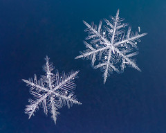 Broken Like Me (LadyBMerritt) Tags: snowflakes flakes snow ice crystals icecrystals frozen blue pair broken