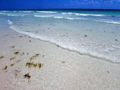 Tulum (thomasgorman1) Tags: seaweed shore tulum mexico canon scenic colors caribbean